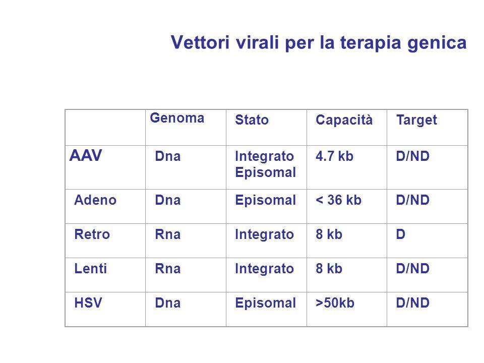 Vettori virali per la terapia genica Genoma StatoCapacitàTarget AAV DnaIntegrato Episomal 4.7 kbD/ND AdenoDnaEpisomal< 36 kbD/ND RetroRnaIntegrato8 kb