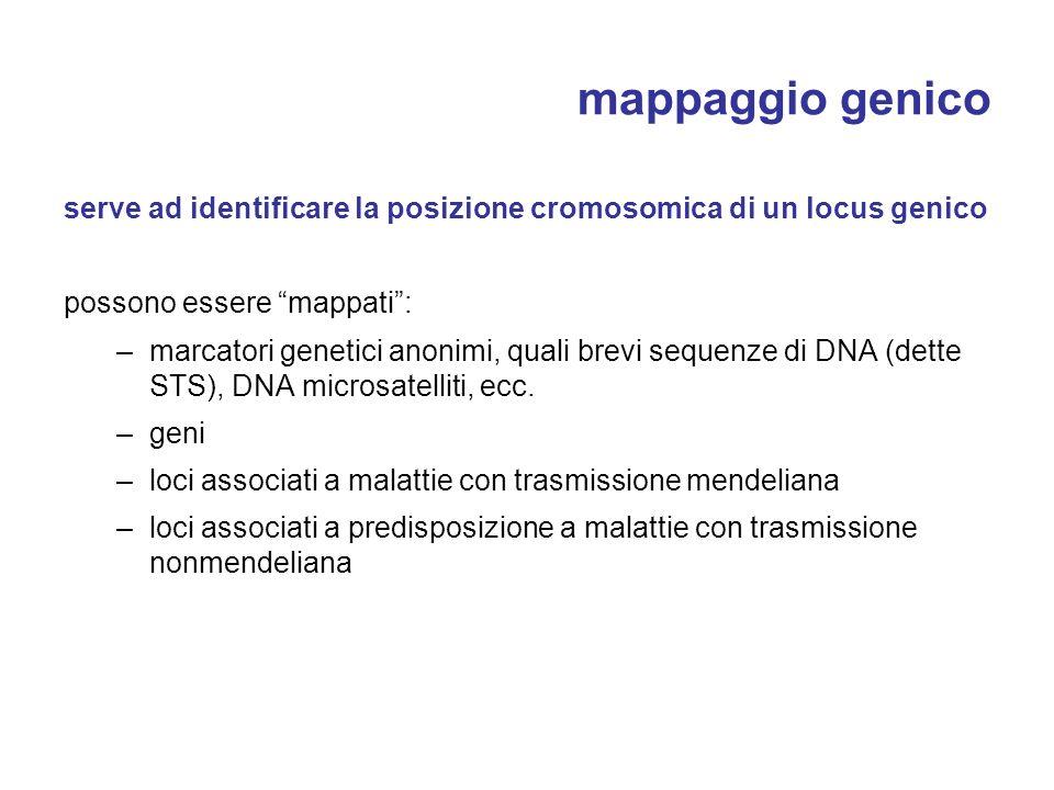 mappaggio genico serve ad identificare la posizione cromosomica di un locus genico possono essere mappati: –marcatori genetici anonimi, quali brevi se