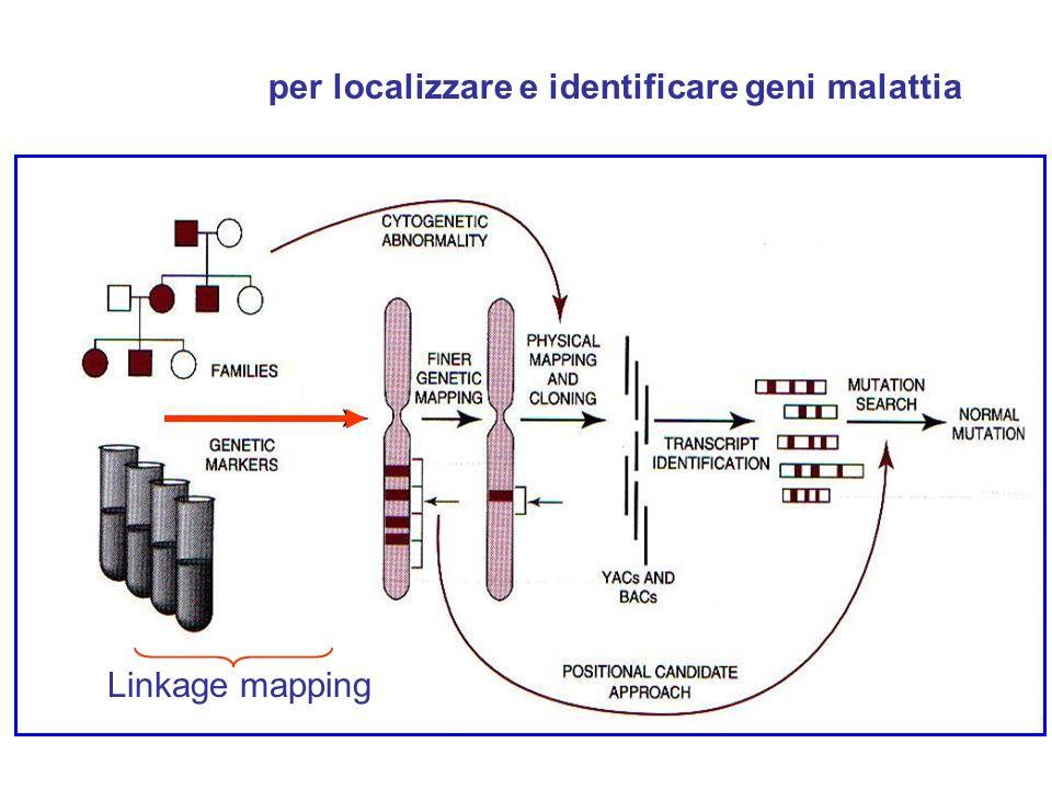 per localizzare e identificare geni malattia Linkage mapping
