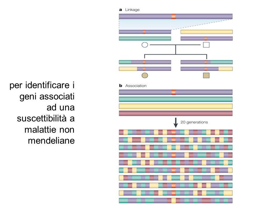 per identificare i geni associati ad una suscettibilità a malattie non mendeliane