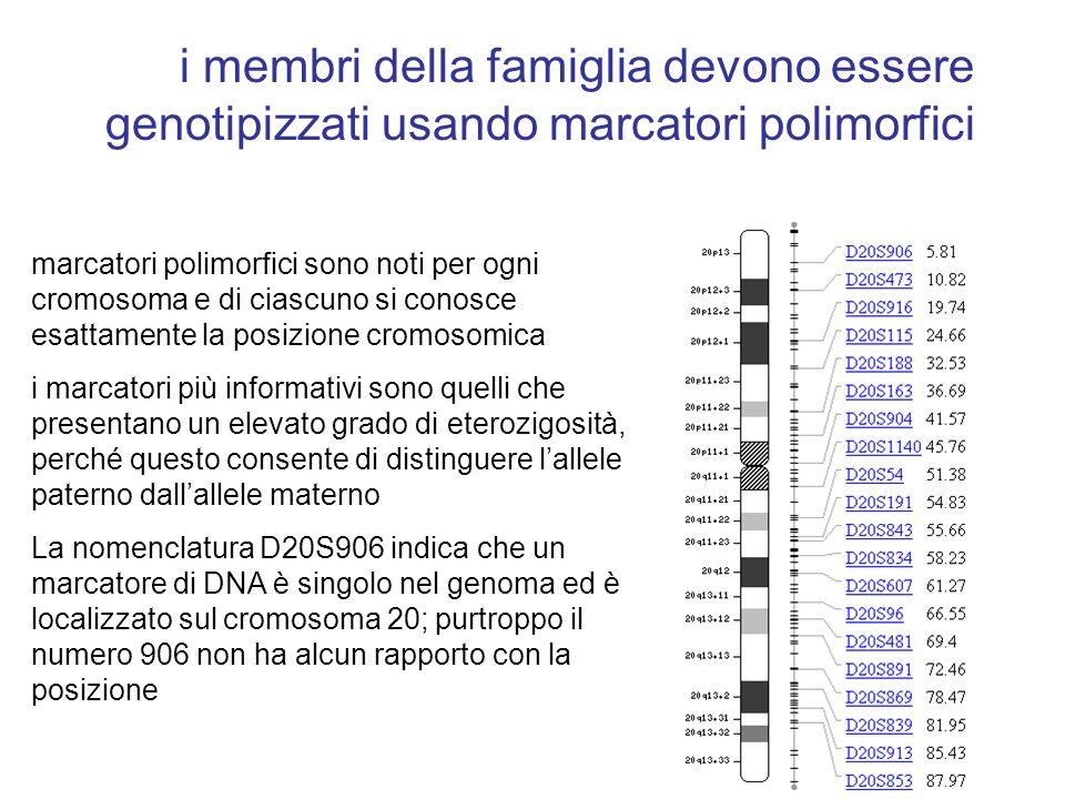 i membri della famiglia devono essere genotipizzati usando marcatori polimorfici marcatori polimorfici sono noti per ogni cromosoma e di ciascuno si c