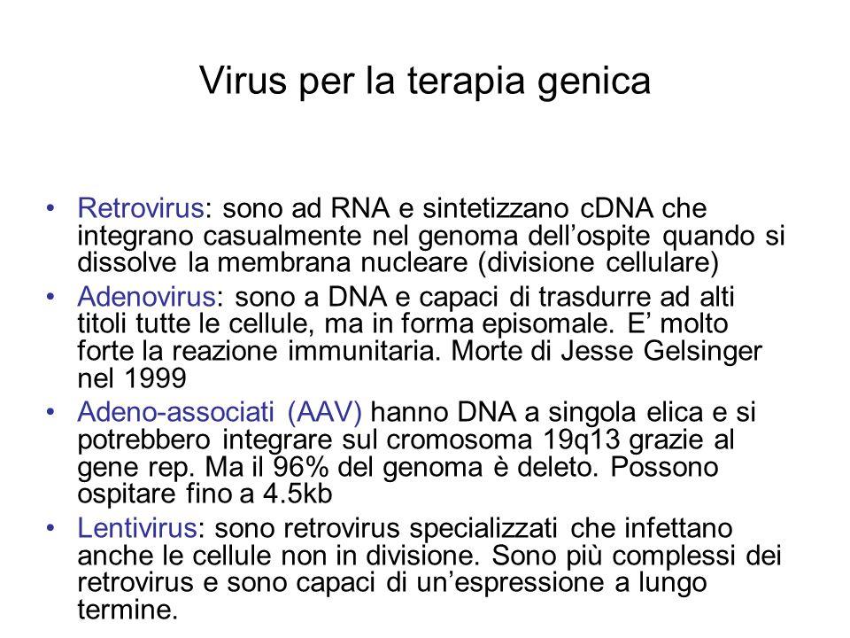 Virus per la terapia genica Retrovirus: sono ad RNA e sintetizzano cDNA che integrano casualmente nel genoma dellospite quando si dissolve la membrana