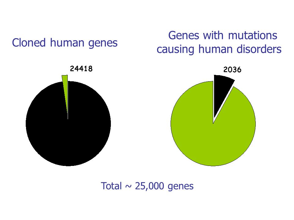 Cloned human genes Genes with mutations causing human disorders Total ~ 25,000 genes 24418 2036