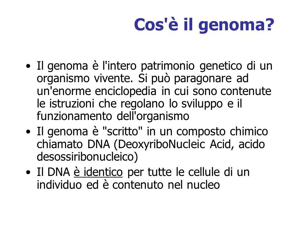 Cos è il genoma. Il genoma è l intero patrimonio genetico di un organismo vivente.