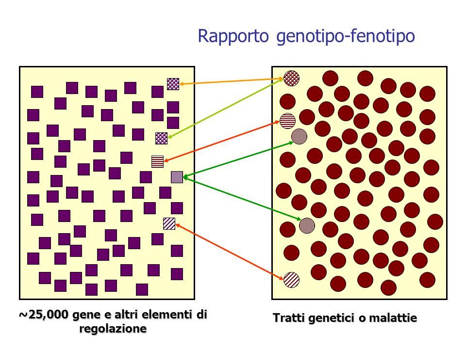 ~25,000 gene e altri elementi di regolazione Tratti genetici o malattie Rapporto genotipo-fenotipo