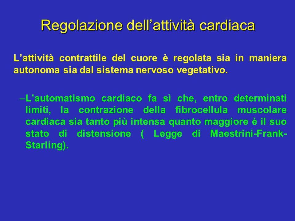 Regolazione dellattività cardiaca Lattività contrattile del cuore è regolata sia in maniera autonoma sia dal sistema nervoso vegetativo. –Lautomatismo
