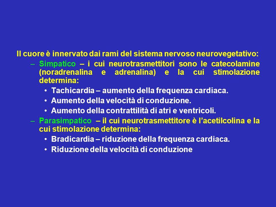 Il cuore è innervato dai rami del sistema nervoso neurovegetativo: –Simpatico – i cui neurotrasmettitori sono le catecolamine (noradrenalina e adrenal