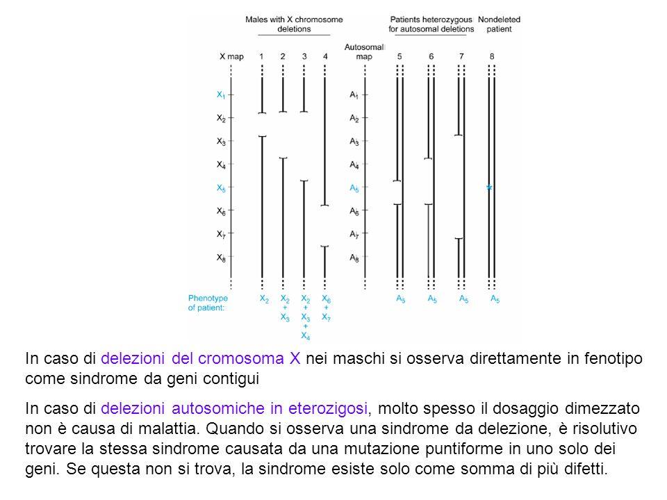 In caso di delezioni del cromosoma X nei maschi si osserva direttamente in fenotipo come sindrome da geni contigui In caso di delezioni autosomiche in