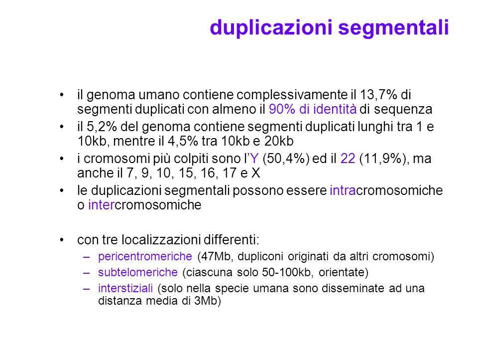 duplicazioni segmentali il genoma umano contiene complessivamente il 13,7% di segmenti duplicati con almeno il 90% di identità di sequenza il 5,2% del