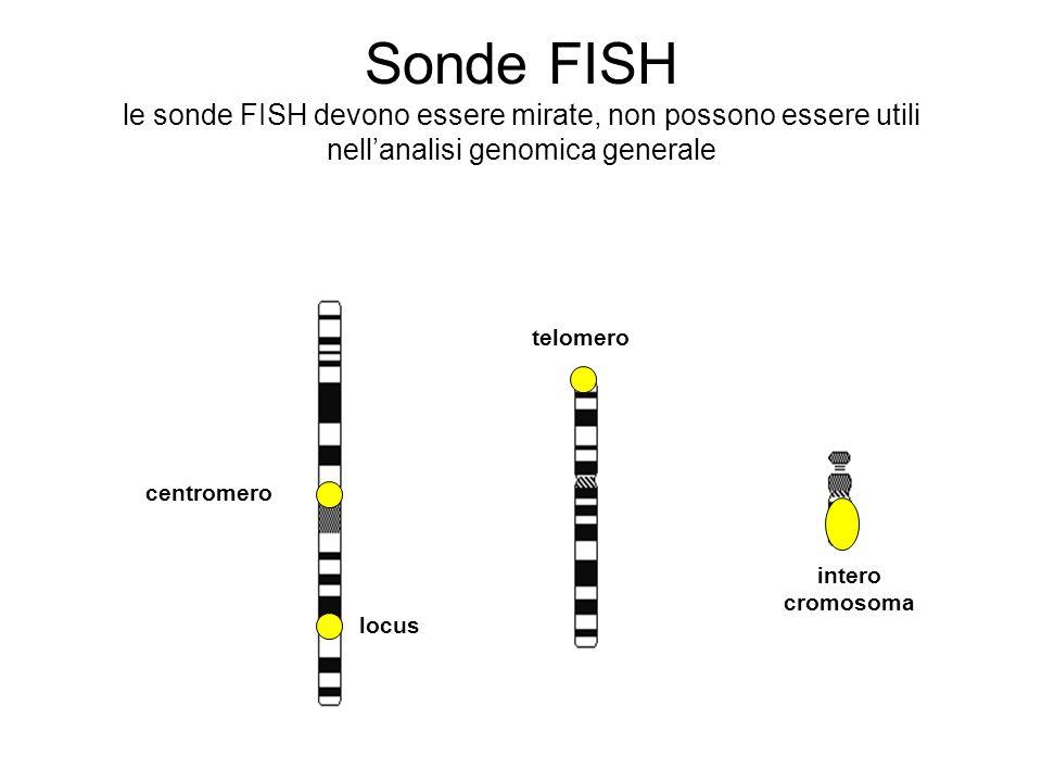Sonde FISH le sonde FISH devono essere mirate, non possono essere utili nellanalisi genomica generale centromero telomero intero cromosoma locus