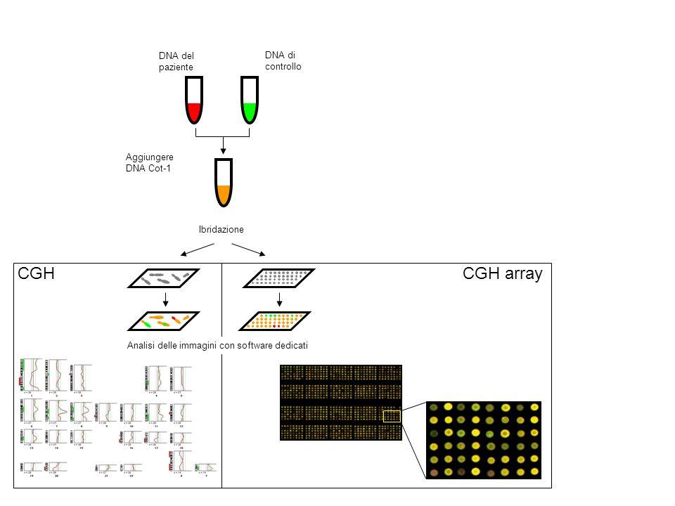 CGH DNA del paziente DNA di controllo Aggiungere DNA Cot-1 Ibridazione Analisi delle immagini con software dedicati CGH array
