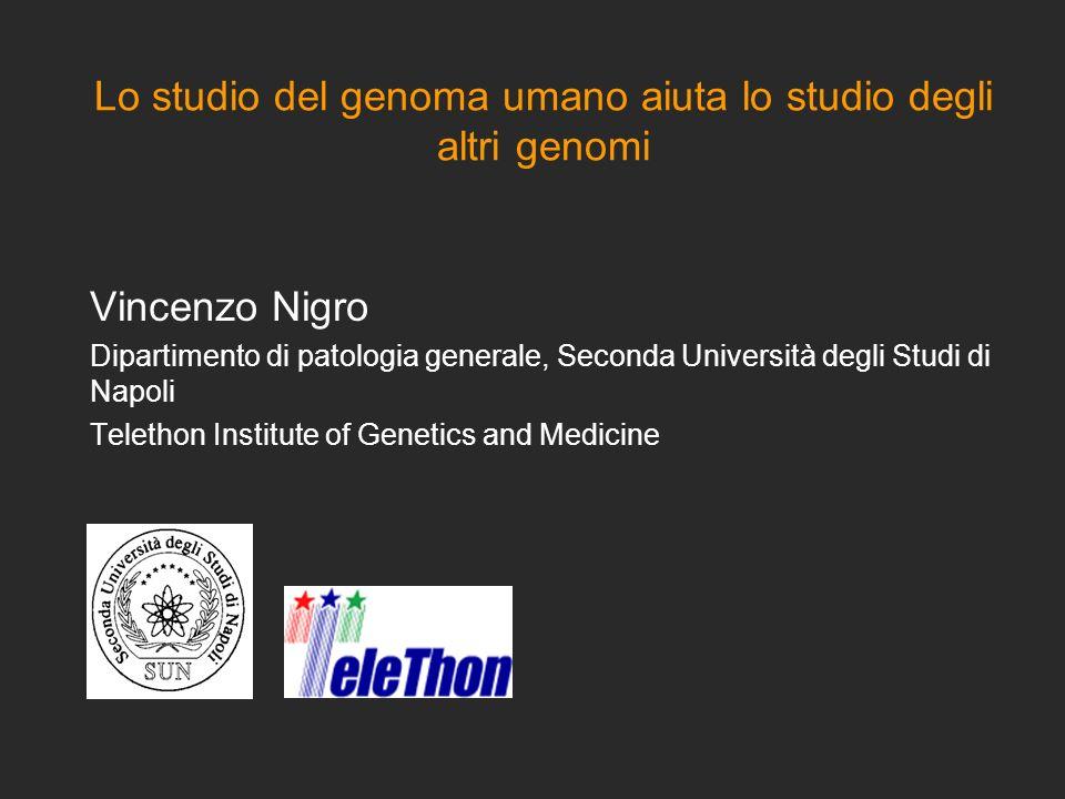 Lo studio del genoma umano aiuta lo studio degli altri genomi Vincenzo Nigro Dipartimento di patologia generale, Seconda Università degli Studi di Nap