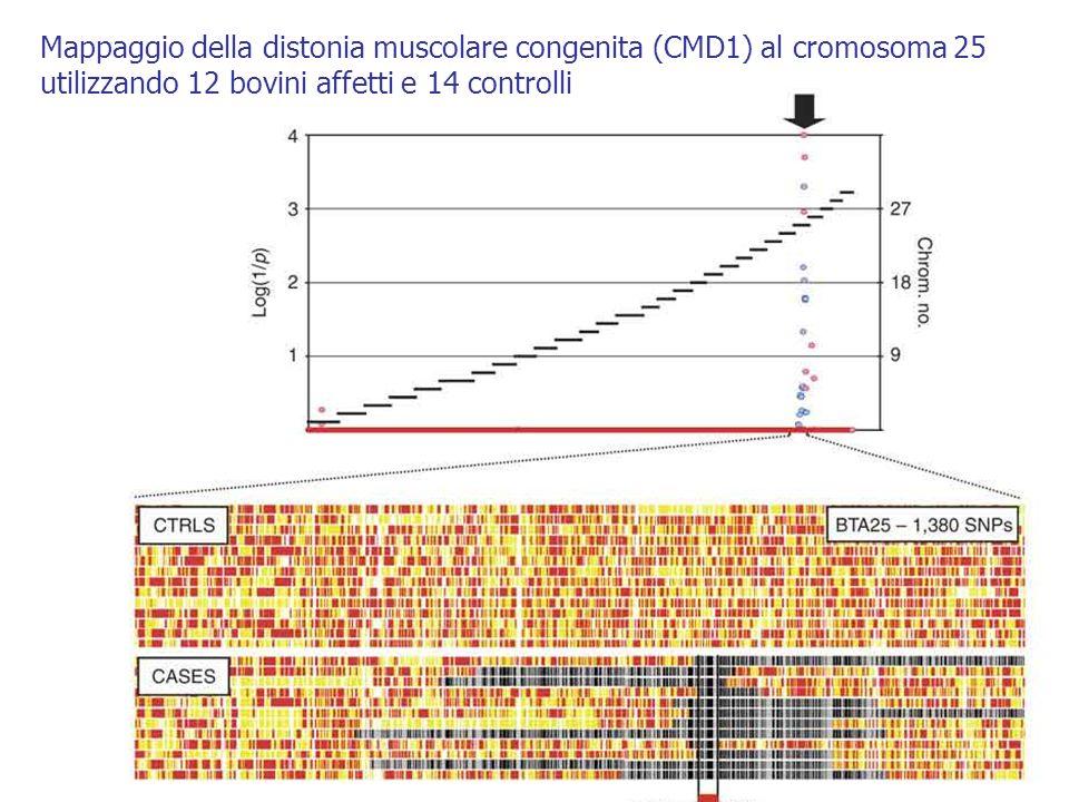 Mappaggio della distonia muscolare congenita (CMD1) al cromosoma 25 utilizzando 12 bovini affetti e 14 controlli