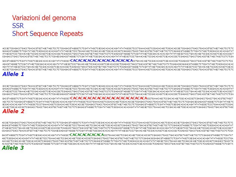 Variazioni del genoma SSR Short Sequence Repeats ACCGCTCGAGACCTGACCTGACACGTGCTAGCTAGCTCCTCTCGAGACGTAGGGCTCTCGATATAGCTCGCGACACACACAGATATATAGCGCTCCCTGAA