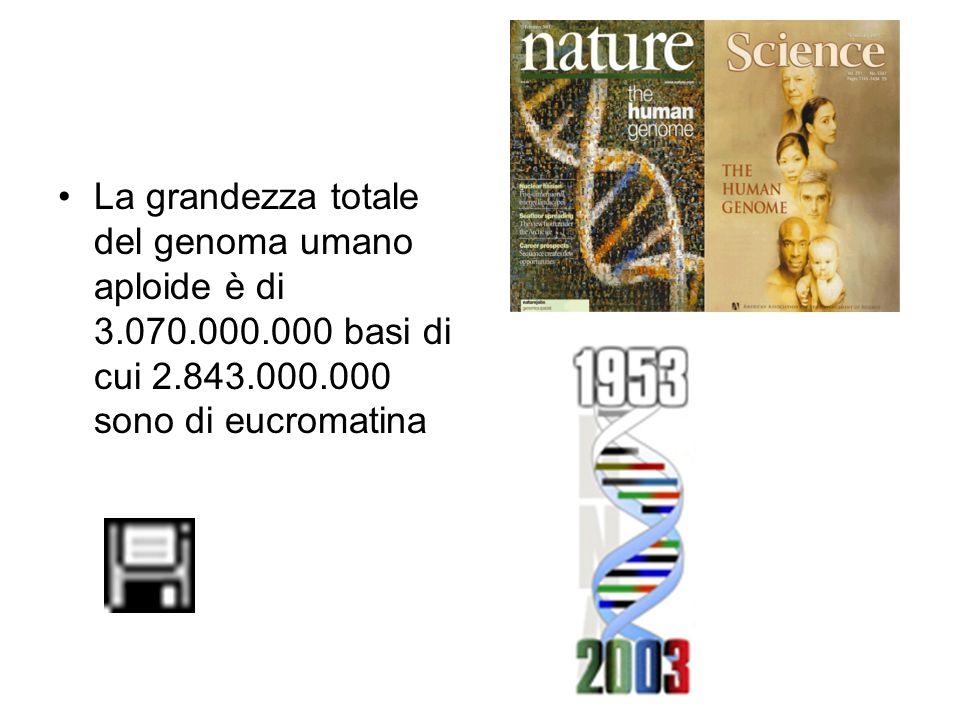 La grandezza totale del genoma umano aploide è di 3.070.000.000 basi di cui 2.843.000.000 sono di eucromatina