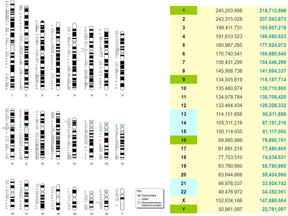 geni umani codificanti proteine … con mutazioni che causano malattie genetiche 7jan09 24.383 2.572 = 10.5% geni umani ipotetici, pseudogeni o altro 11.032..