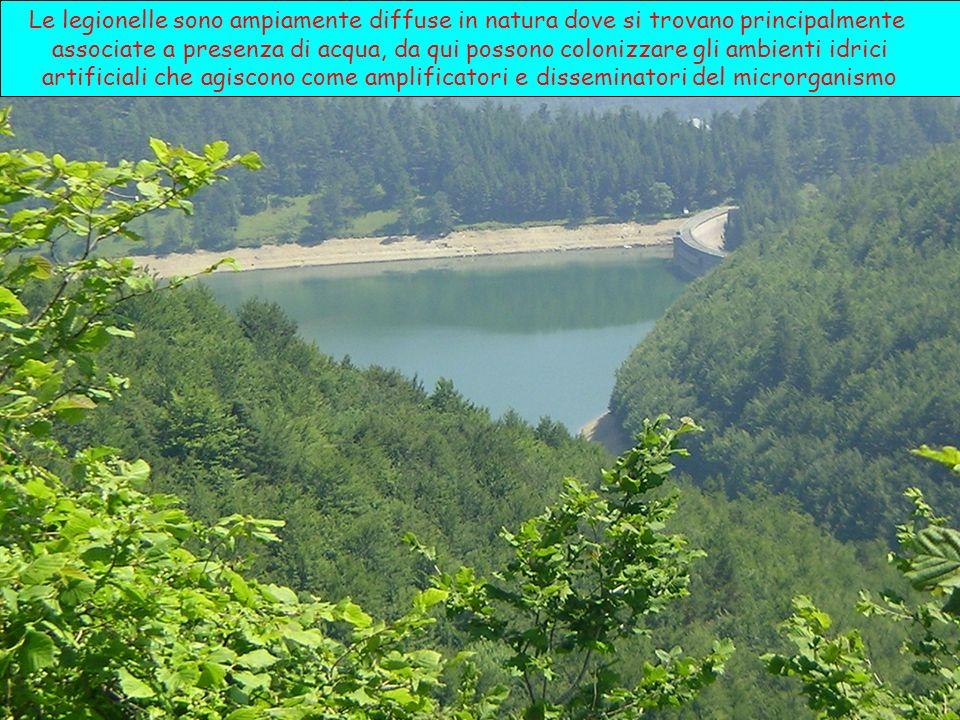 Le legionelle sono ampiamente diffuse in natura dove si trovano principalmente associate a presenza di acqua, da qui possono colonizzare gli ambienti