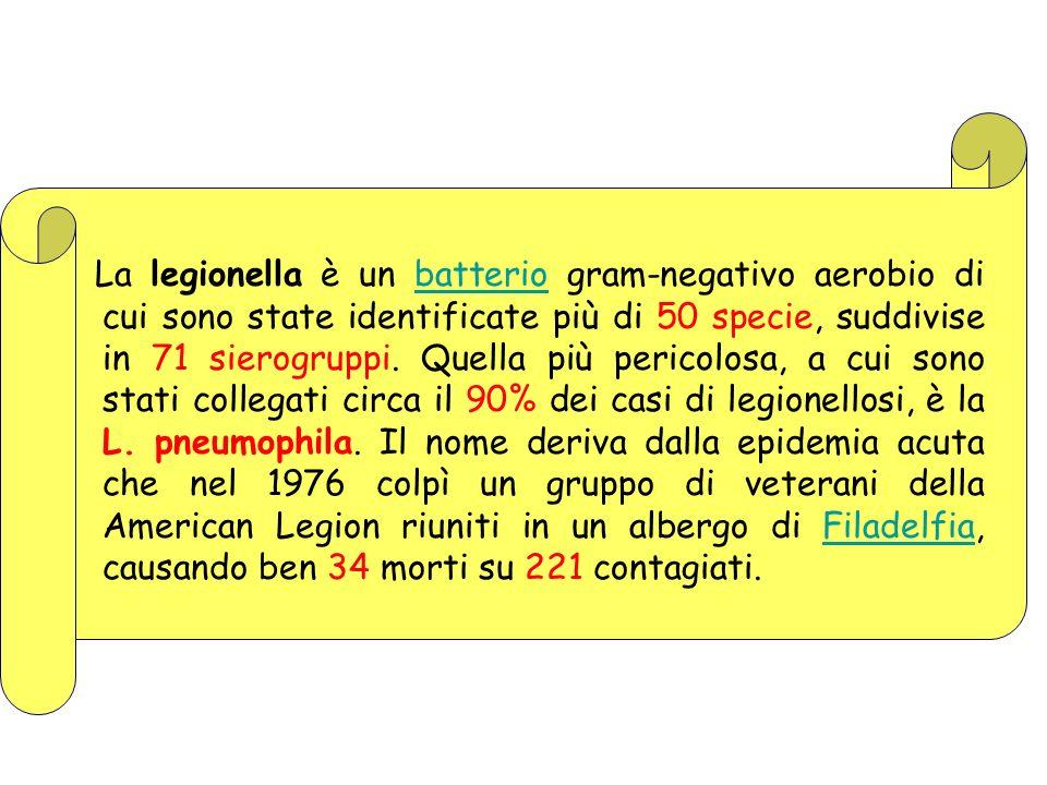 La legionella è un batterio gram-negativo aerobio di cui sono state identificate più di 50 specie, suddivise in 71 sierogruppi. Quella più pericolosa,