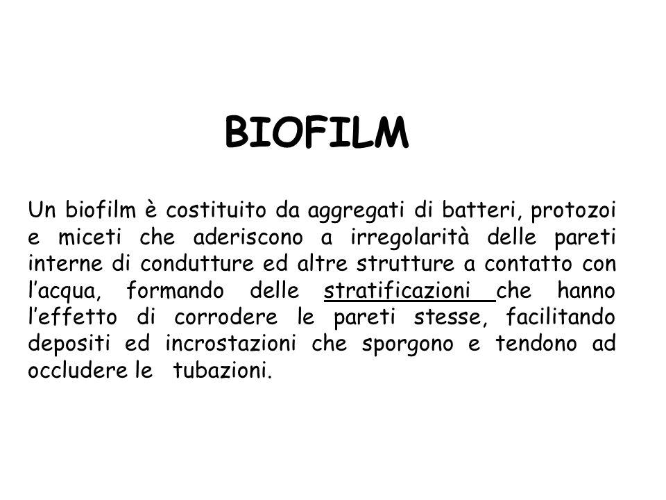 BIOFILM Un biofilm è costituito da aggregati di batteri, protozoi e miceti che aderiscono a irregolarità delle pareti interne di condutture ed altre s