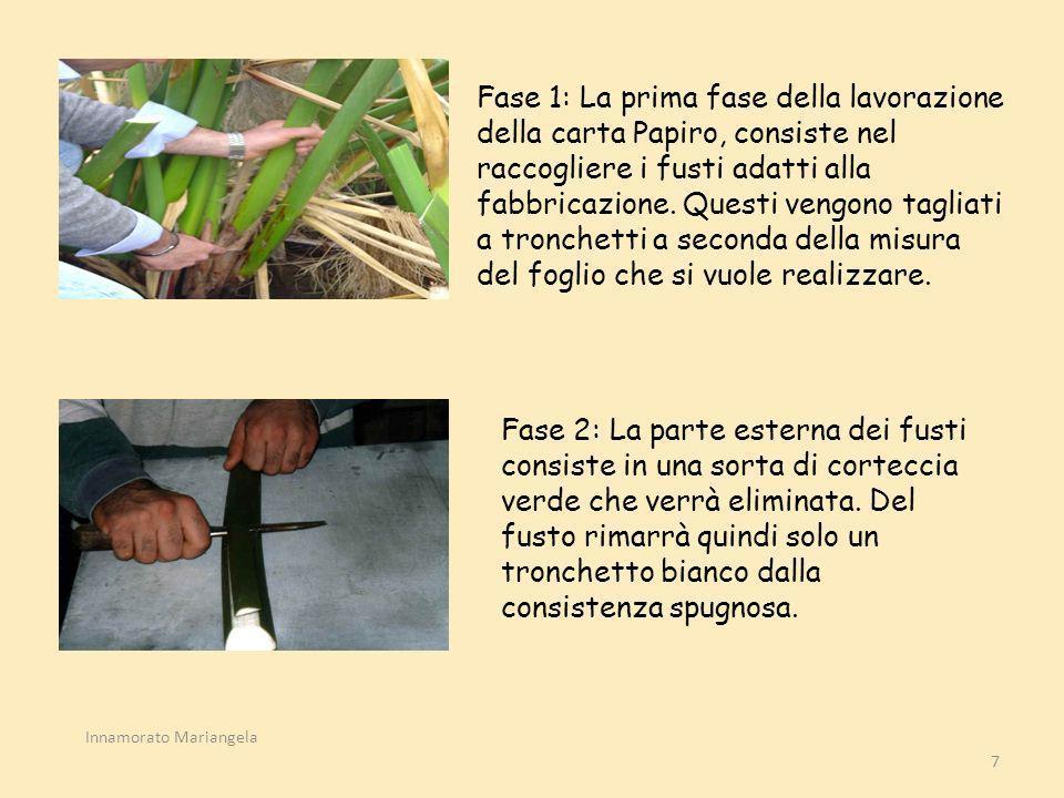 7 Fase 1: La prima fase della lavorazione della carta Papiro, consiste nel raccogliere i fusti adatti alla fabbricazione. Questi vengono tagliati a tr