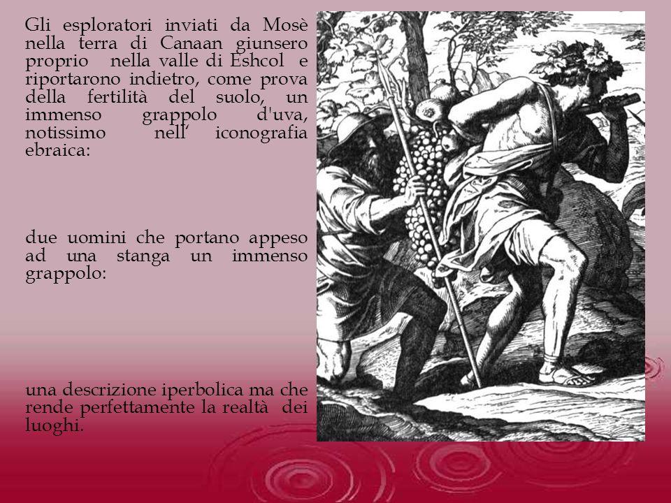Gli esploratori inviati da Mosè nella terra di Canaan giunsero proprio nella valle di Eshcol e riportarono indietro, come prova della fertilità del su