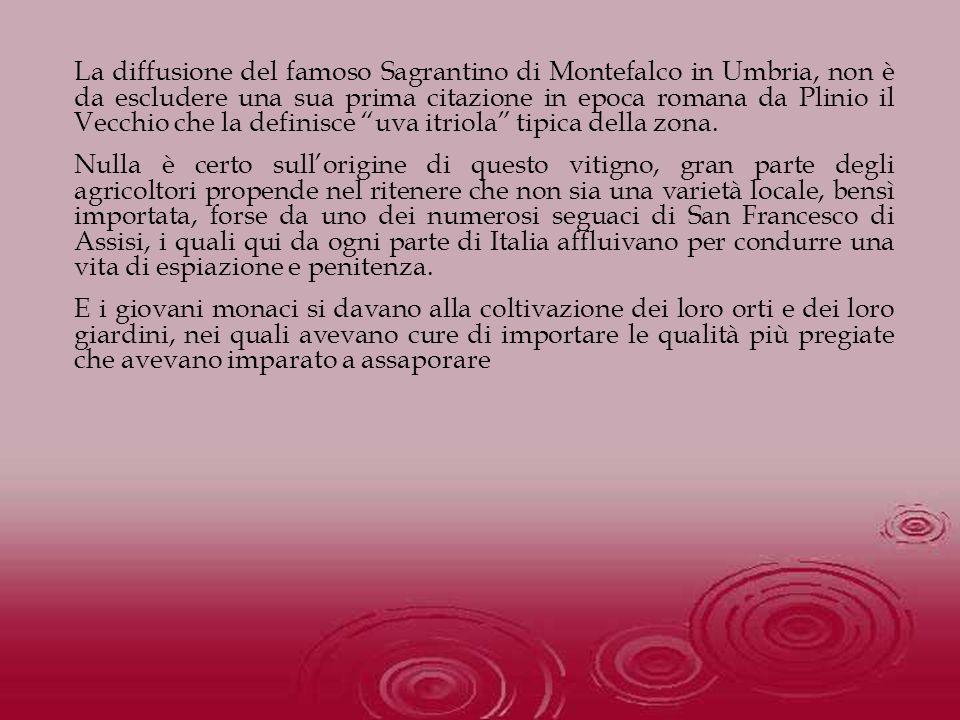 La diffusione del famoso Sagrantino di Montefalco in Umbria, non è da escludere una sua prima citazione in epoca romana da Plinio il Vecchio che la de