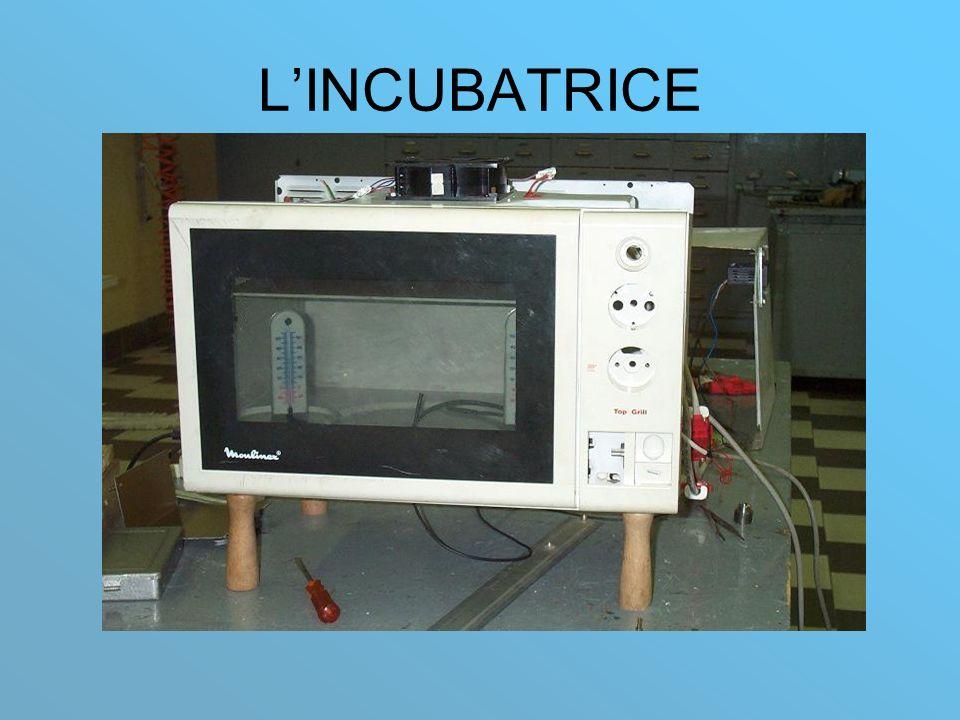 LINCUBATRICE