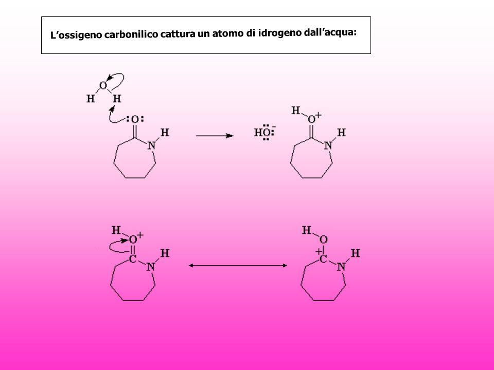 Lossigeno carbonilico cattura un atomo di idrogeno dallacqua: