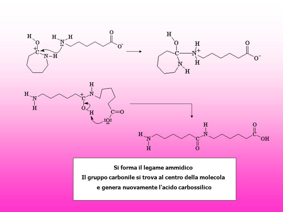 Si forma il legame ammidico Il gruppo carbonile si trova al centro della molecola e genera nuovamente l acido carbossilico