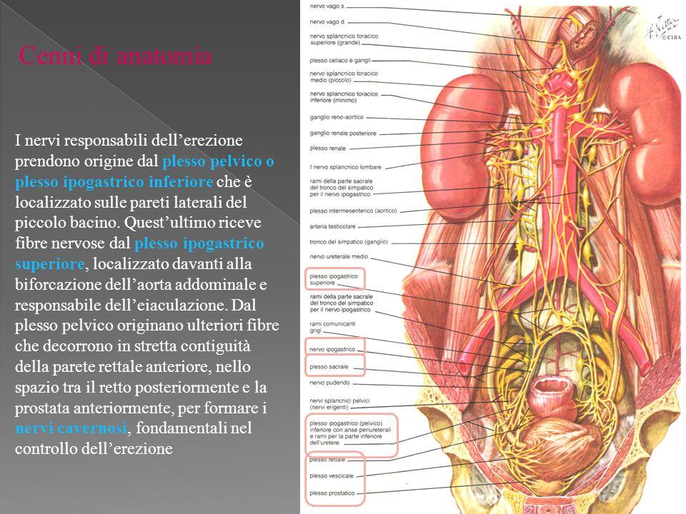 La Prevenzione della Disfunzione Erettiva dopo prostatectomia radicale CONSIDERAZIONI ANATOMICHE E FISIOLOGICHE Plesso Pelvico e Prostatico Il plesso pelvico è una struttura retroperitoneale localizzata lateralmente alle pareti del retto.