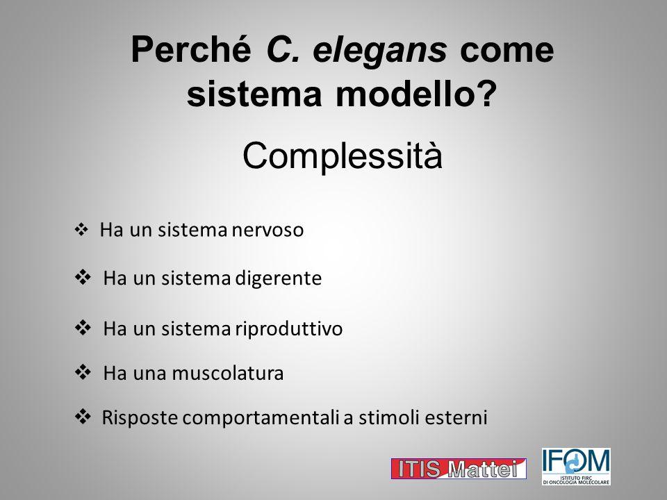 Ha un sistema nervoso Ha un sistema digerente Risposte comportamentali a stimoli esterni Ha una muscolatura Perché C. elegans come sistema modello? Ha