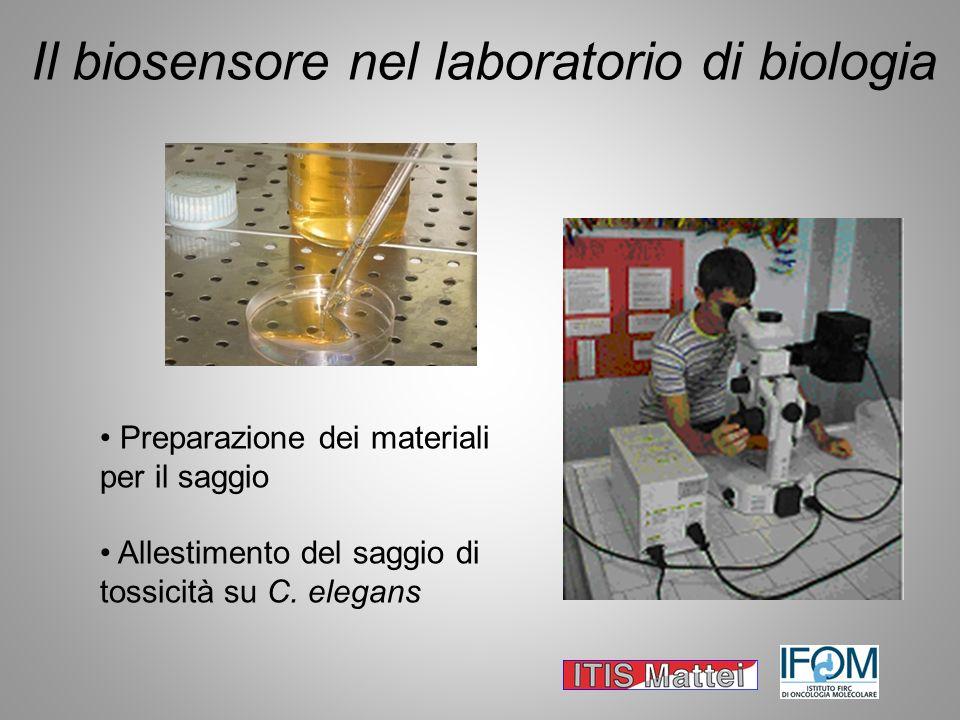 Il biosensore nel laboratorio di biologia Preparazione dei materiali per il saggio Allestimento del saggio di tossicità su C. elegans
