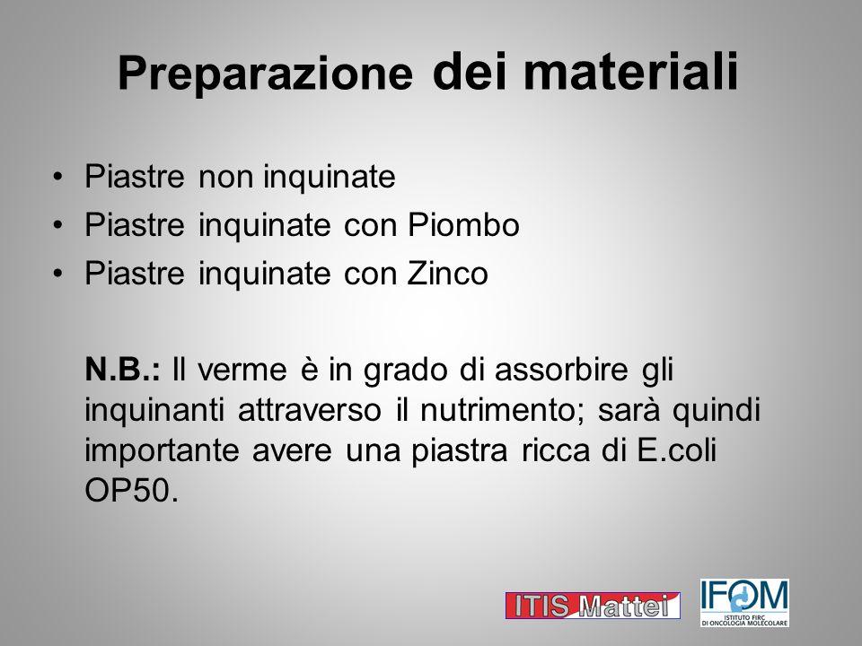 Preparazione dei materiali Piastre non inquinate Piastre inquinate con Piombo Piastre inquinate con Zinco N.B.: Il verme è in grado di assorbire gli i