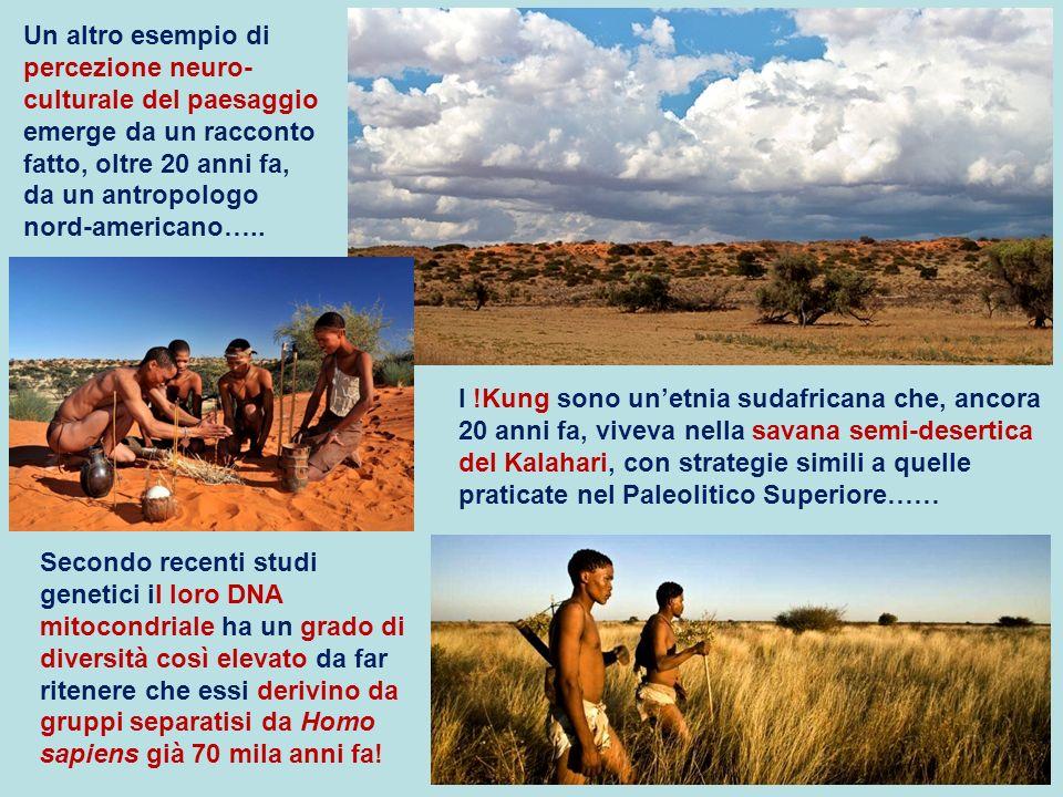 I !Kung sono unetnia sudafricana che, ancora 20 anni fa, viveva nella savana semi-desertica del Kalahari, con strategie simili a quelle praticate nel