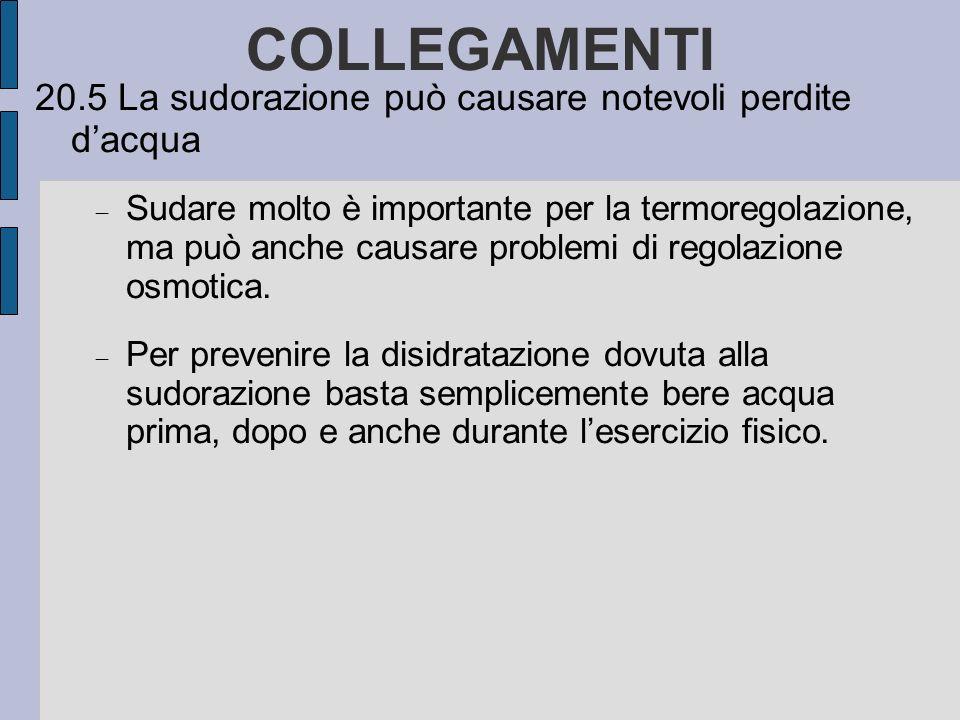 COLLEGAMENTI 20.5 La sudorazione può causare notevoli perdite dacqua Sudare molto è importante per la termoregolazione, ma può anche causare problemi di regolazione osmotica.