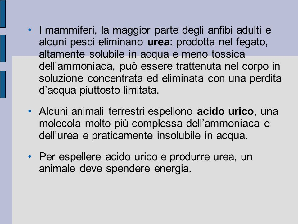I mammiferi, la maggior parte degli anfibi adulti e alcuni pesci eliminano urea: prodotta nel fegato, altamente solubile in acqua e meno tossica dellammoniaca, può essere trattenuta nel corpo in soluzione concentrata ed eliminata con una perdita dacqua piuttosto limitata.