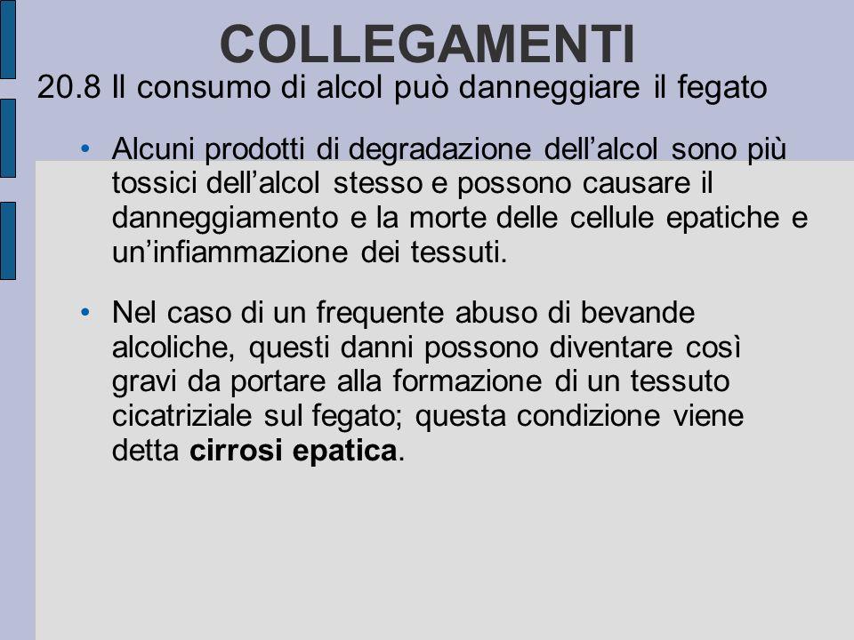 20.8 Il consumo di alcol può danneggiare il fegato Alcuni prodotti di degradazione dellalcol sono più tossici dellalcol stesso e possono causare il danneggiamento e la morte delle cellule epatiche e uninfiammazione dei tessuti.
