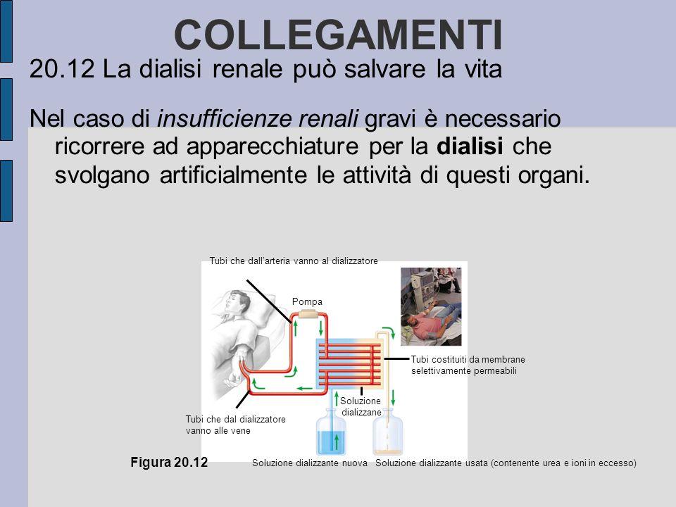 COLLEGAMENTI 20.12 La dialisi renale può salvare la vita Nel caso di insufficienze renali gravi è necessario ricorrere ad apparecchiature per la dialisi che svolgano artificialmente le attività di questi organi.