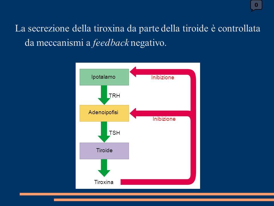 0 Ipotalamo Inibizione TRH Adenoipofisi Tiroide TSH Tiroxina La secrezione della tiroxina da parte della tiroide è controllata da meccanismi a feedback negativo.