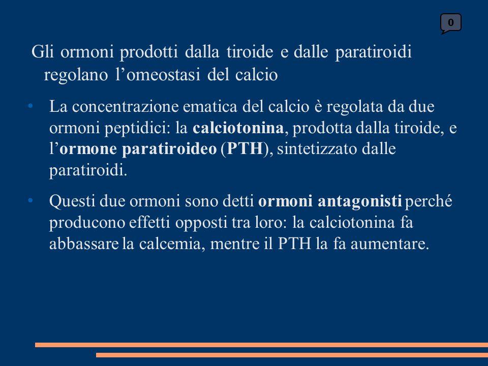 Gli ormoni prodotti dalla tiroide e dalle paratiroidi regolano lomeostasi del calcio La concentrazione ematica del calcio è regolata da due ormoni peptidici: la calciotonina, prodotta dalla tiroide, e lormone paratiroideo (PTH), sintetizzato dalle paratiroidi.