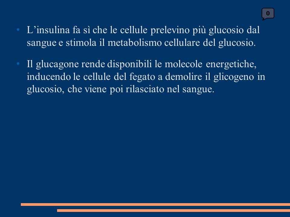 Linsulina fa sì che le cellule prelevino più glucosio dal sangue e stimola il metabolismo cellulare del glucosio.