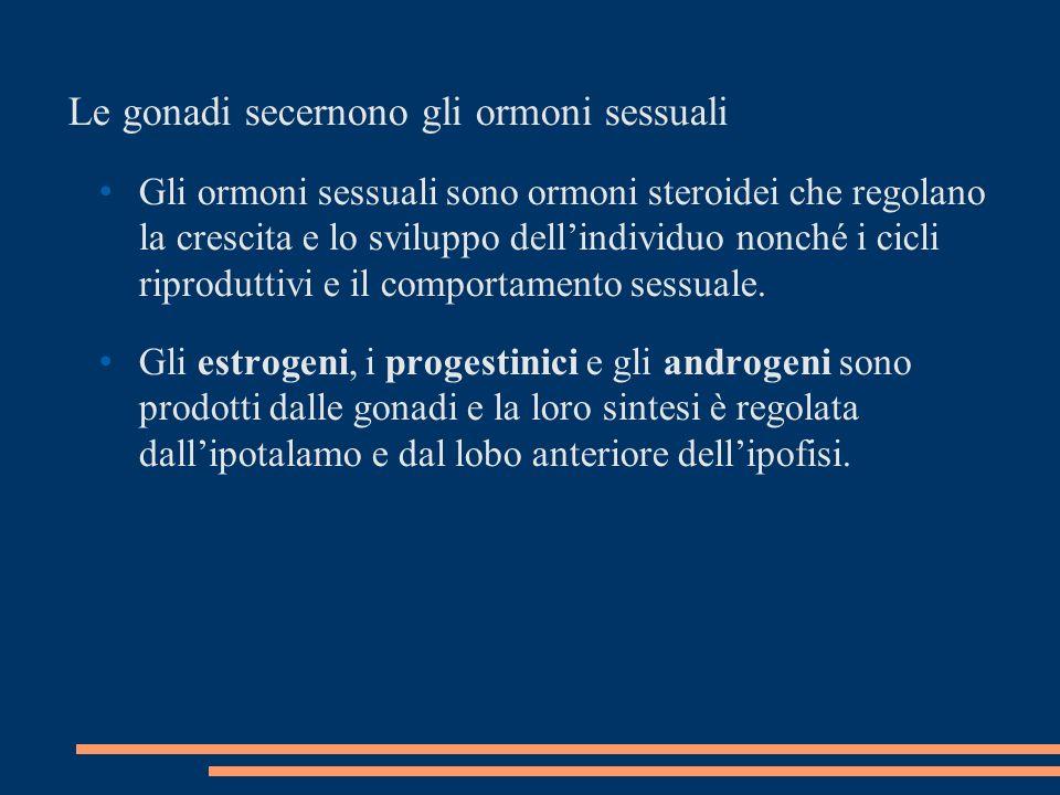 Le gonadi secernono gli ormoni sessuali Gli ormoni sessuali sono ormoni steroidei che regolano la crescita e lo sviluppo dellindividuo nonché i cicli riproduttivi e il comportamento sessuale.