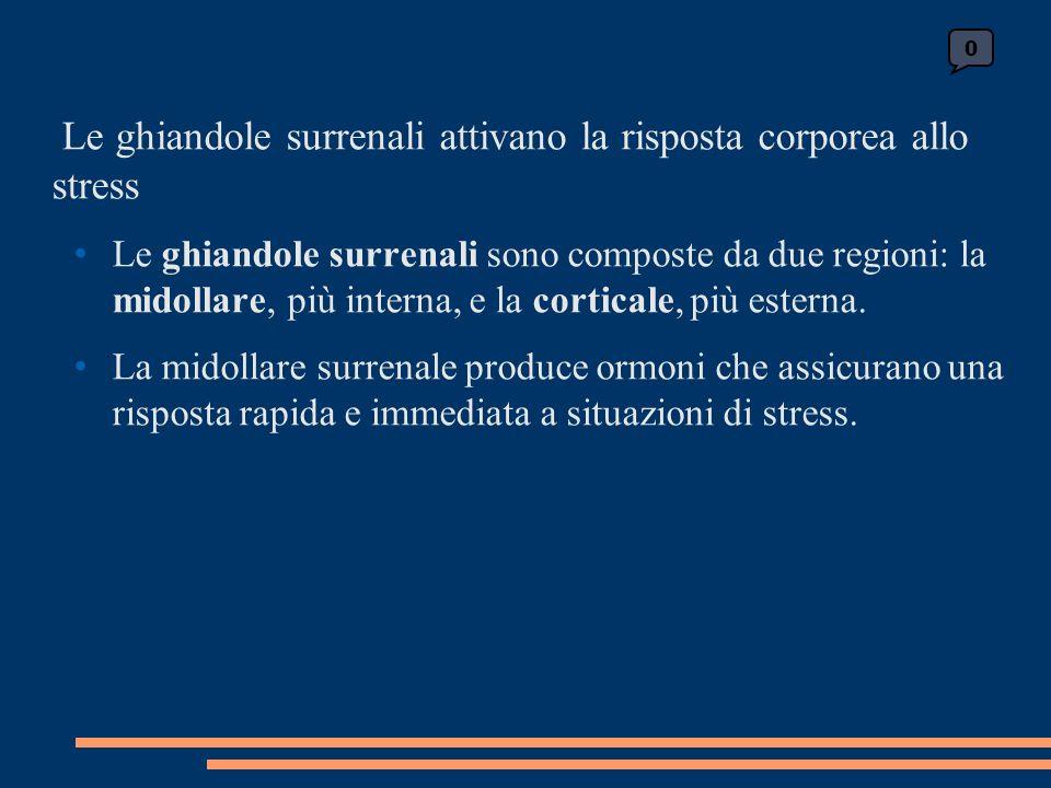 0 Le ghiandole surrenali attivano la risposta corporea allo stress Le ghiandole surrenali sono composte da due regioni: la midollare, più interna, e la corticale, più esterna.