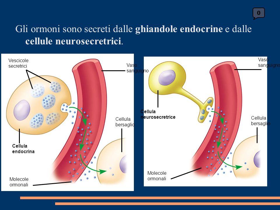 Cellula neurosecretrice Molecole ormonali Vaso sanguigno Cellula bersaglio 0 Vescicole secretrici Cellula endocrina Molecole ormonali Cellula bersaglio Vaso sanguigno Gli ormoni sono secreti dalle ghiandole endocrine e dalle cellule neurosecretrici.