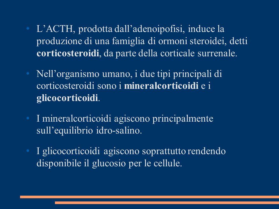 LACTH, prodotta dalladenoipofisi, induce la produzione di una famiglia di ormoni steroidei, detti corticosteroidi, da parte della corticale surrenale.