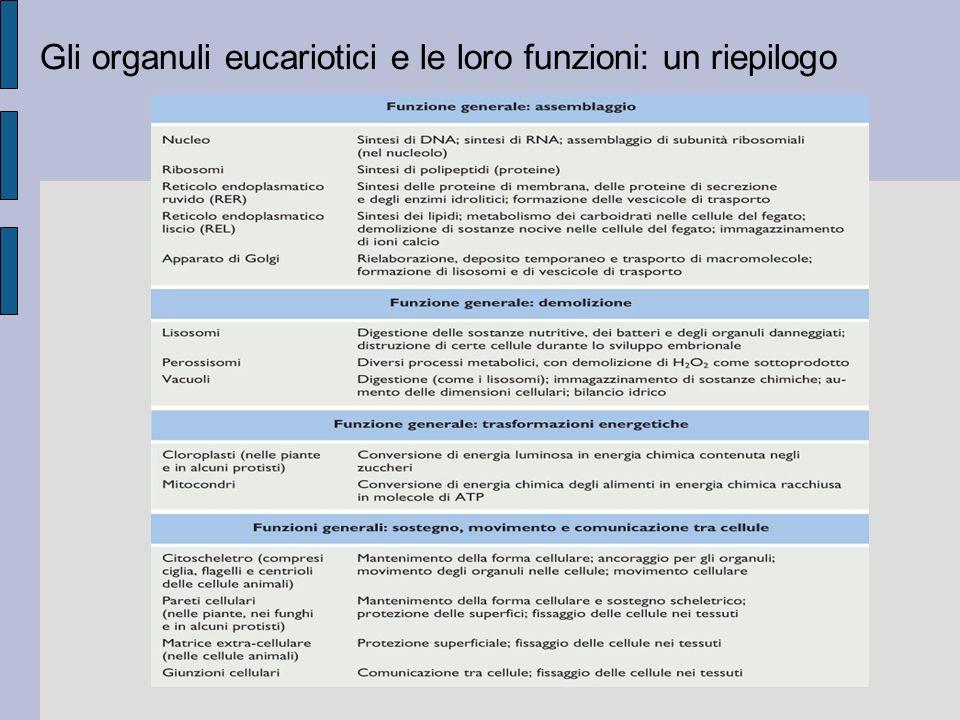 Gli organuli eucariotici e le loro funzioni: un riepilogo