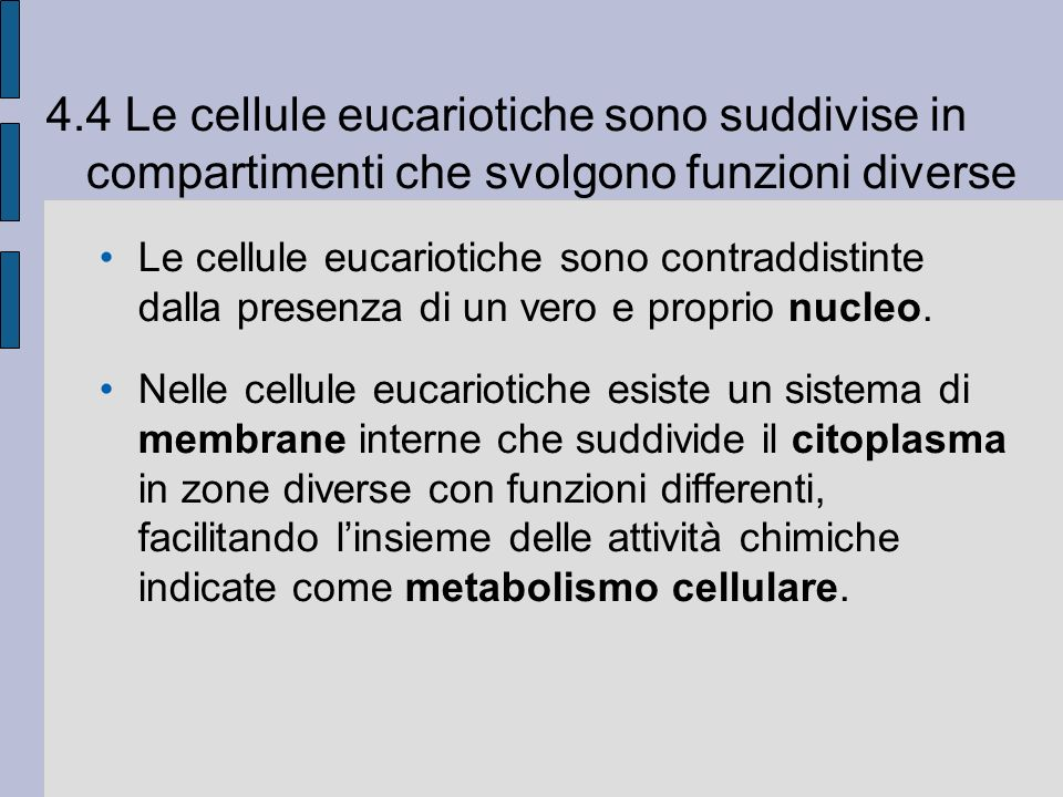 4.4 Le cellule eucariotiche sono suddivise in compartimenti che svolgono funzioni diverse Le cellule eucariotiche sono contraddistinte dalla presenza di un vero e proprio nucleo.