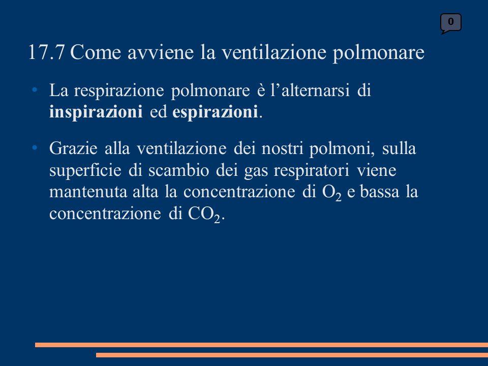 17.7 Come avviene la ventilazione polmonare La respirazione polmonare è lalternarsi di inspirazioni ed espirazioni.