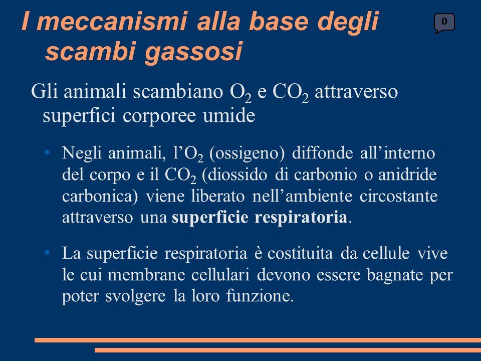 Gli animali scambiano O 2 e CO 2 attraverso superfici corporee umide Negli animali, lO 2 (ossigeno) diffonde allinterno del corpo e il CO 2 (diossido di carbonio o anidride carbonica) viene liberato nellambiente circostante attraverso una superficie respiratoria.