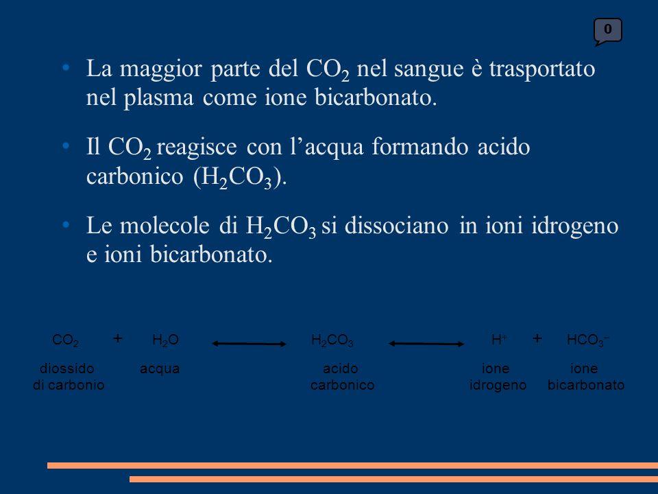 La maggior parte del CO 2 nel sangue è trasportato nel plasma come ione bicarbonato.